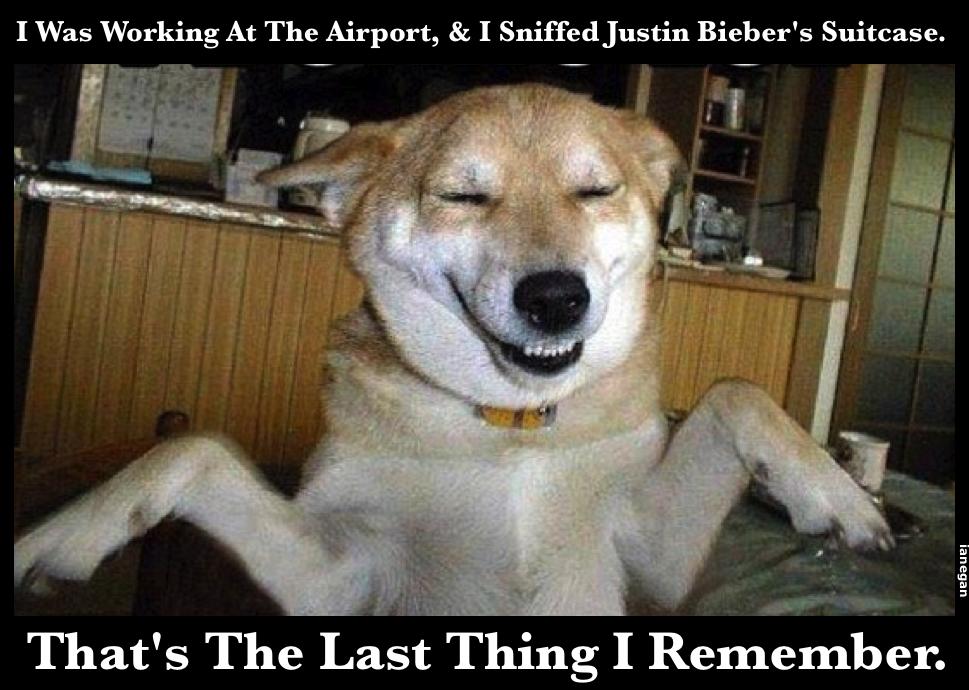 Biebers Suitcase Sniffed.jpg