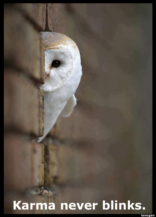 Spirit Animal Watching (Owl).jpg