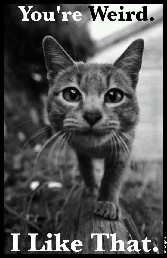 Yer Weird Cat.jpg