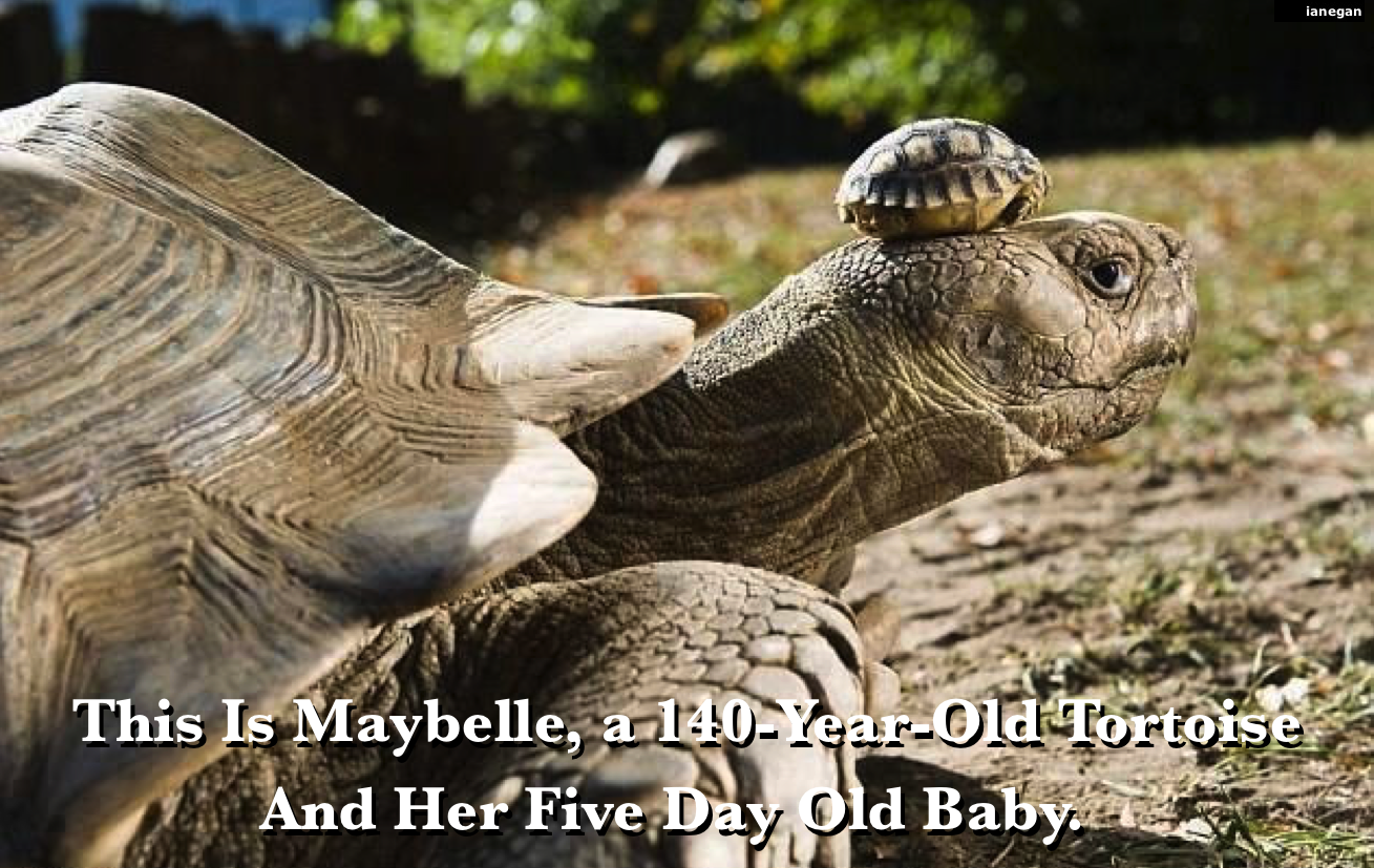 140-Year-Old Momma & 5 Day Kid.jpg