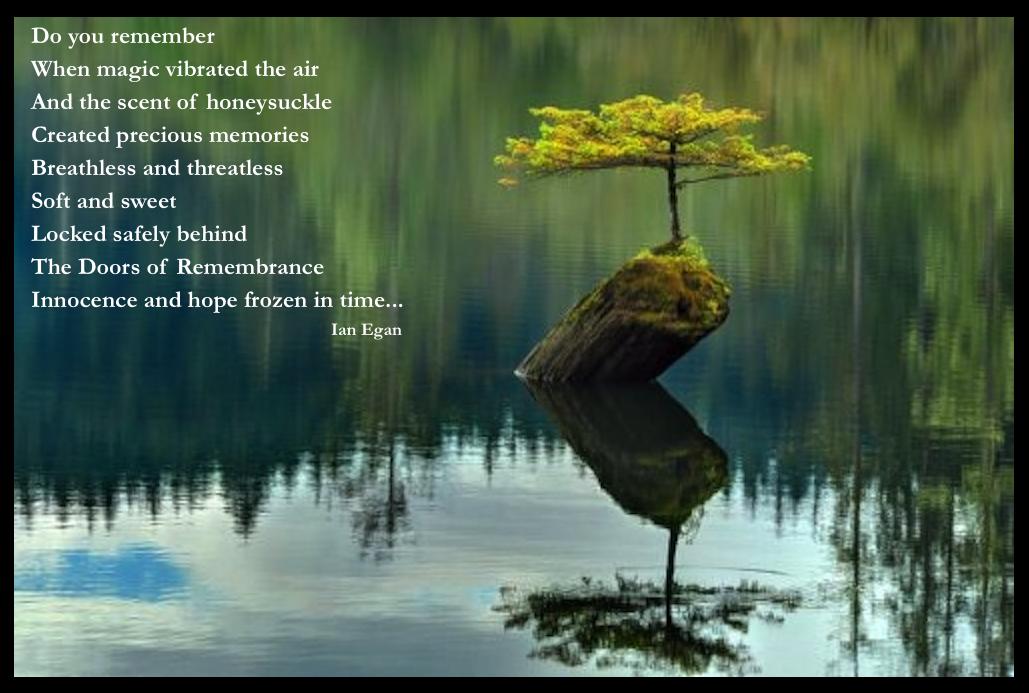 Zen Tree.jpg