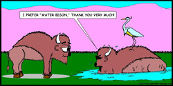 Water Bison