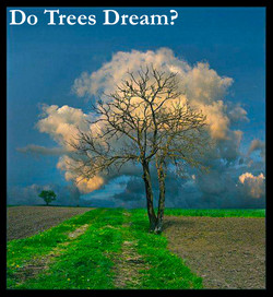 Tree Dreams.jpg