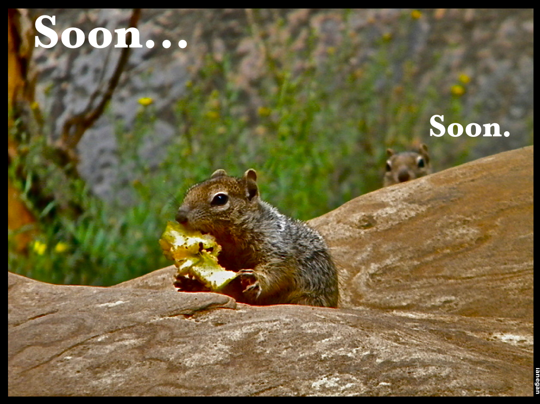 Squirrel-Soon.jpg