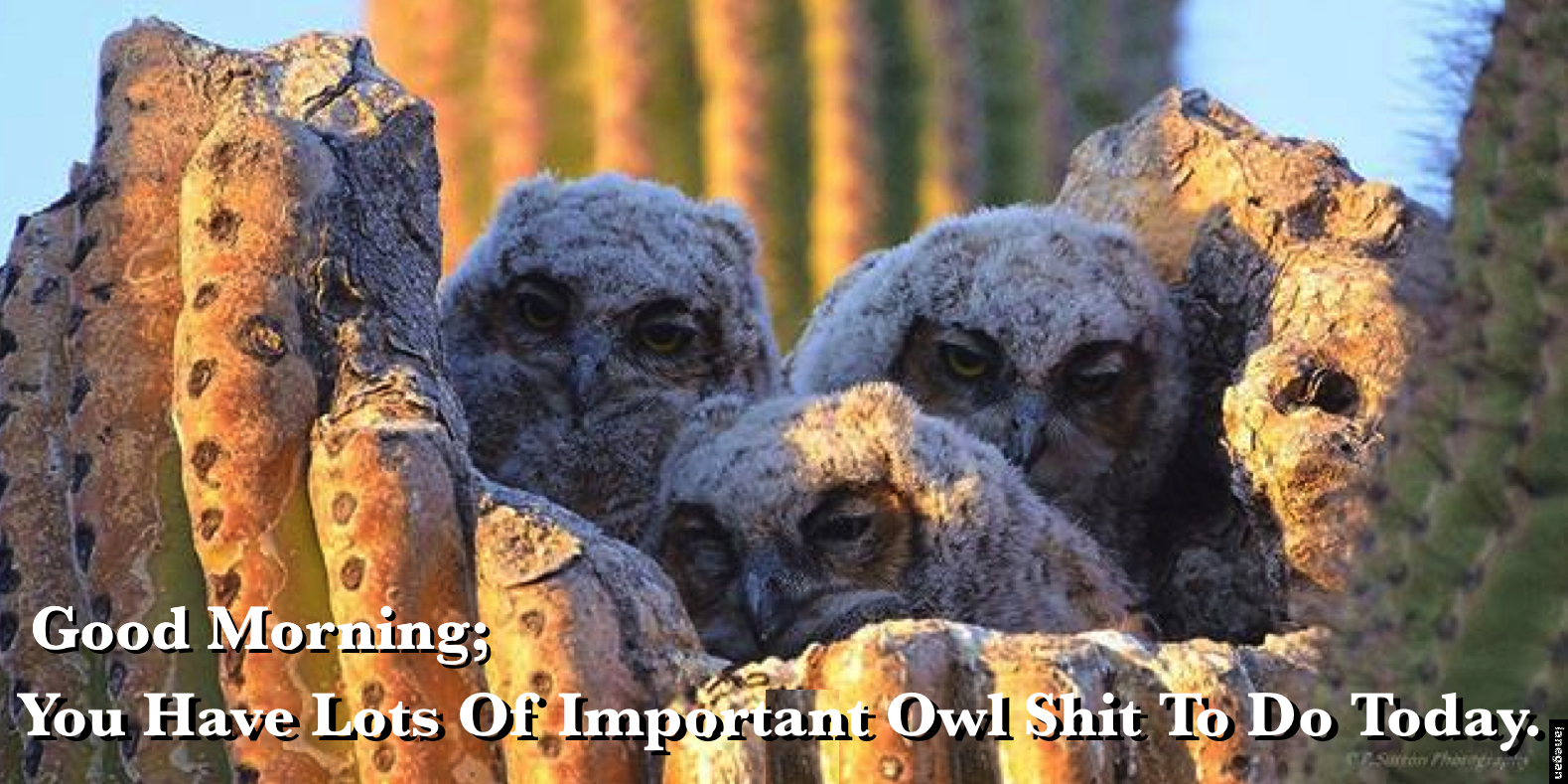 Owl Morning.jpg