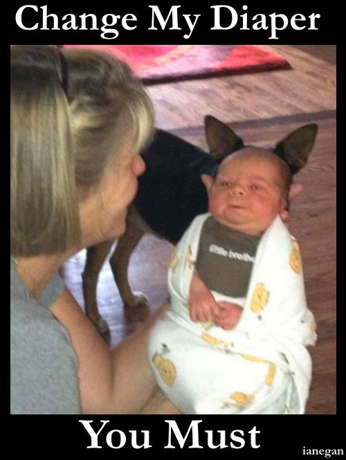 Yoda Baby.jpg
