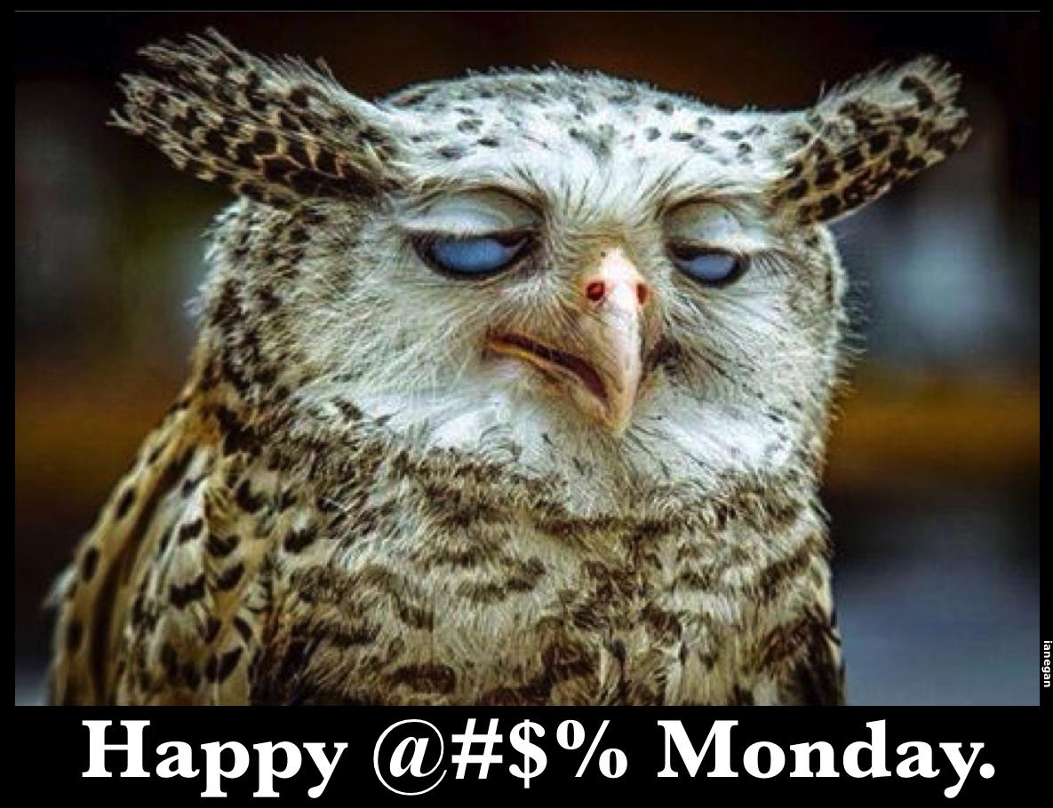 Monday Owl.jpg