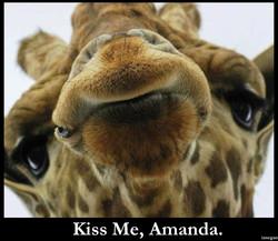Kiss Me Giraffe.jpg