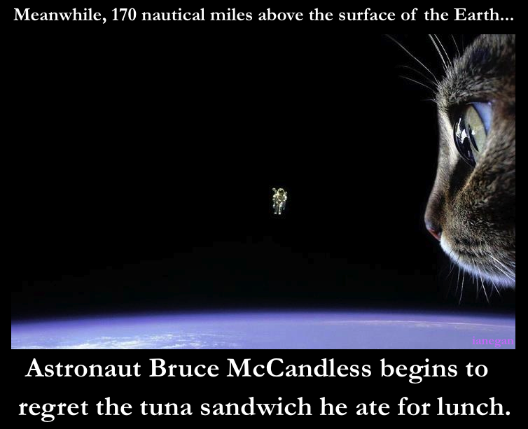 Cosmic Kitty.jpg