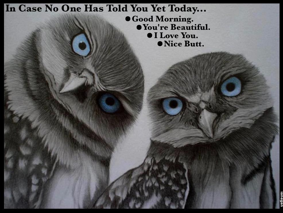 Nice Butt Owls.jpg