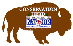NABR Bison Silouette.png