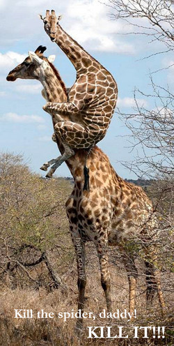 Giraffe Vs Spiders.jpg