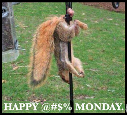 Happy Monday Squirrel.jpg
