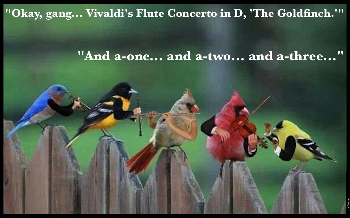 Bird Orchestra.jpg