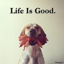 Happy Puppy.jpg