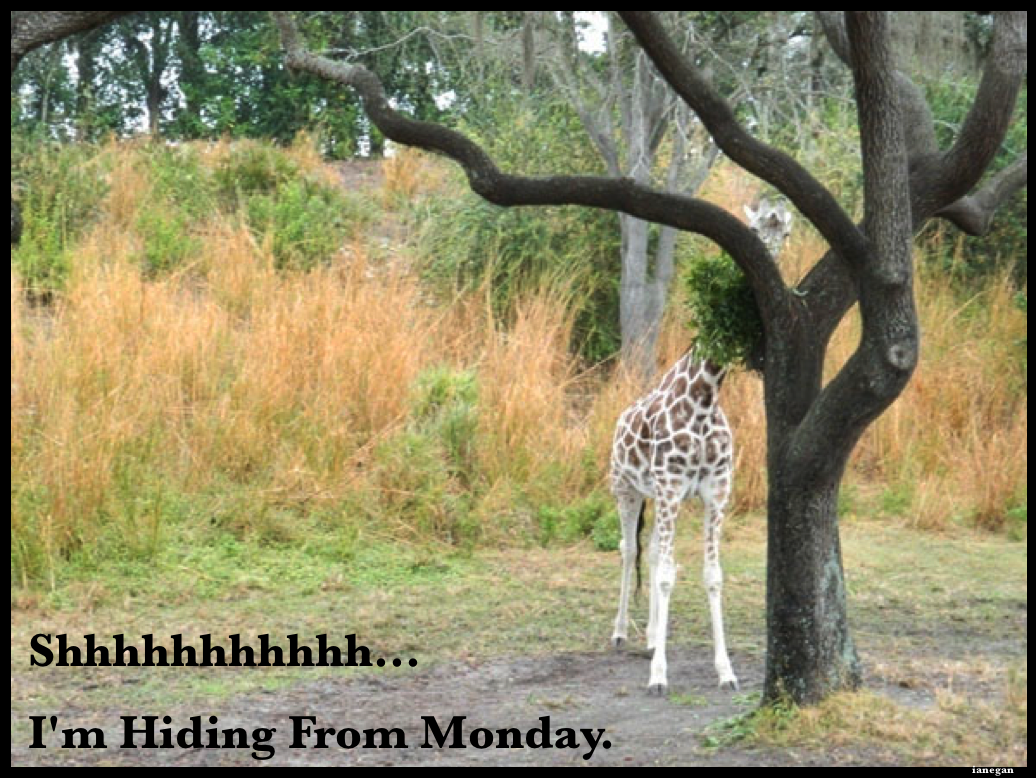 Giraffe Hiding From Monday.jpg