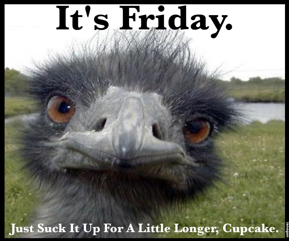 Friday's Ostrich.jpg