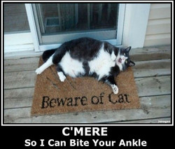 Beware Of Cat.jpg