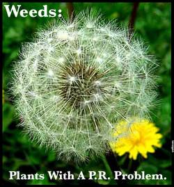 Weeds-PR Problem.jpg