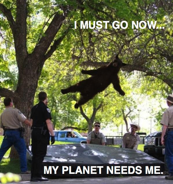 Levitating Bear.jpg