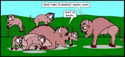 Bison Babysitter