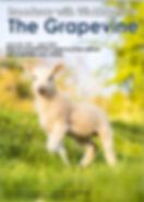 June Grapevine Magazine