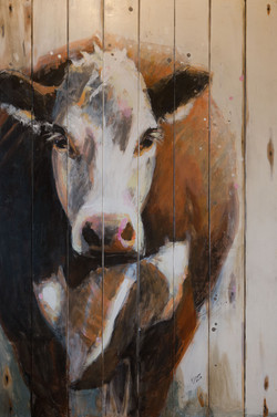 SOLD - Hereford Cow