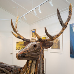 Stag, close up