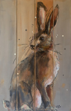 Hare Today, Gone Tomorrow 1