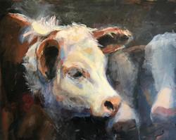 Castlerock Calf Sale Hereford Heifer