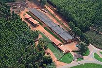 Capivari Madeiras®: Postes tratado eucalipto; mourões; caibros; decks; madeira reflorestada para  construção civil e rural