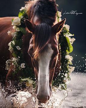 Pferdefotografin Lea Fliegner