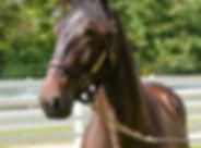 horsie.jpg