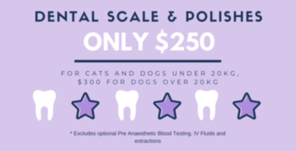 Dental Prices