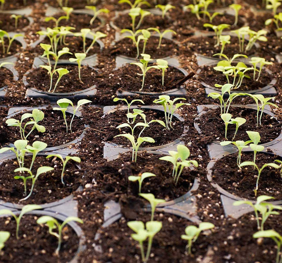 seedingthefuture2b.jpg
