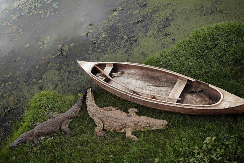 Crocodiles_Retouchés_50x60_MG_6358 1.jpg