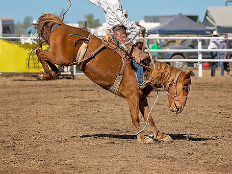 Cowboy riding a bucking bronc horse in rodeo competition.