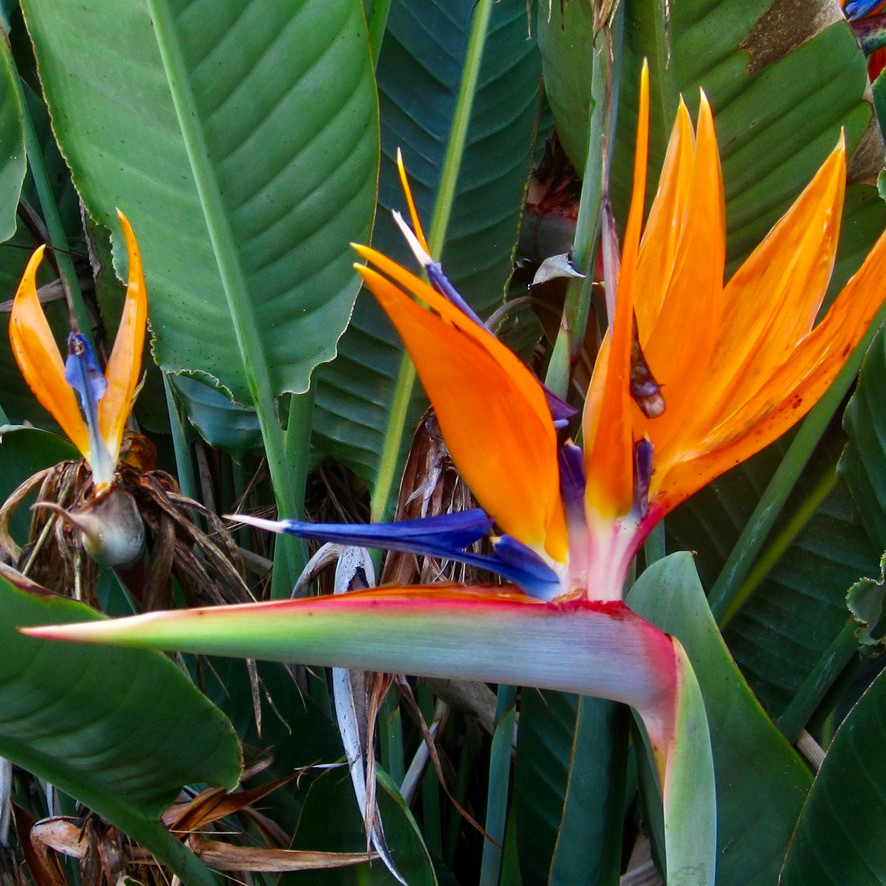 Welcome to Paradise birds