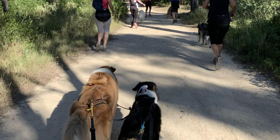 Cani rando entre Lambesc et La barben