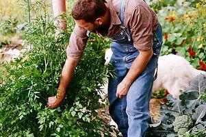 Snoeien van struiken en planten