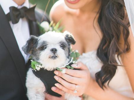 Anna + David - Wente Vineyard Wedding