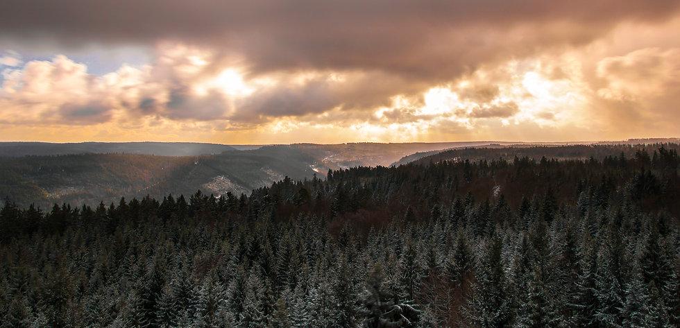 Bad Wildbad Baumwipfelpfad.jpg