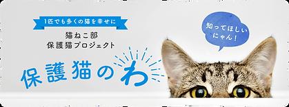 「保護猫のわ」記事