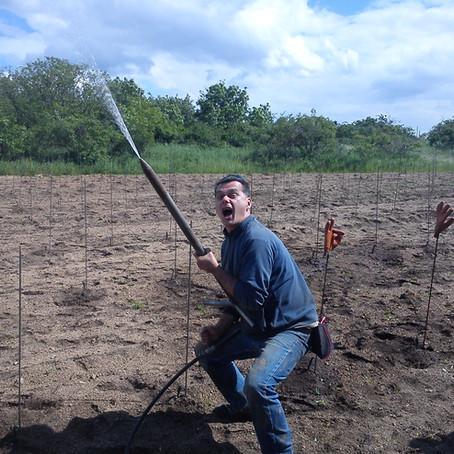 Neuauspflanzung Steinparz 1