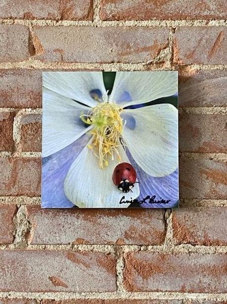 Ladybug on Flower Picture