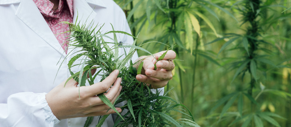 USDA Review and Approval of State and Tribal Government Hemp Plans Gaining Momentum