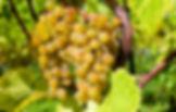 grapes-2715711.jpg