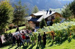 Vivite viticole (69)