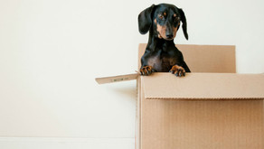 Are You Preparing to Move Soon?