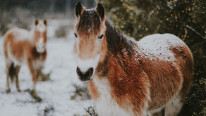 Guest Ranches To Visit This Winter